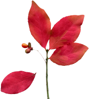 red-leaves-icon