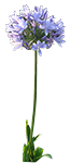 blueflower_icon